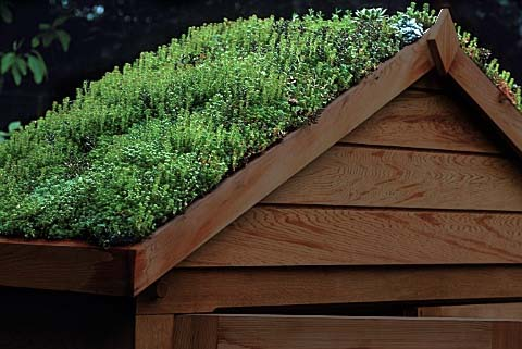 grass roof shed